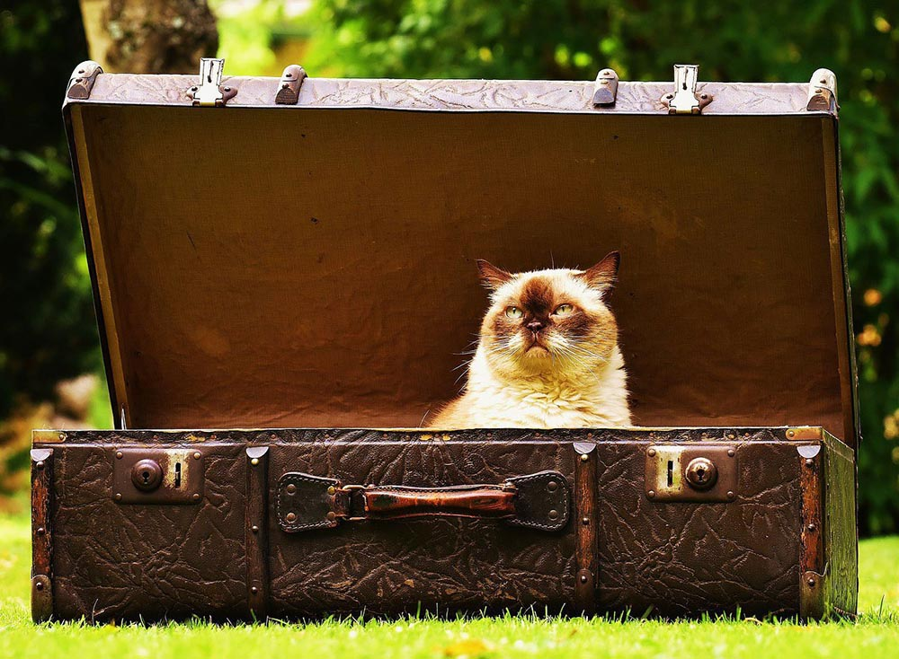 cat_important_traveling_world_travel_bound