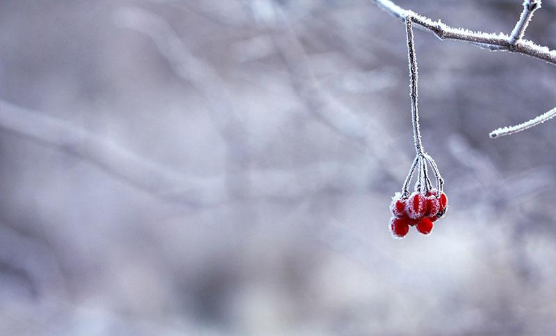 top_5_winter_activities_wtb